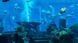 Dubai hotels near Dubai Aquarium & Underwater Zoo